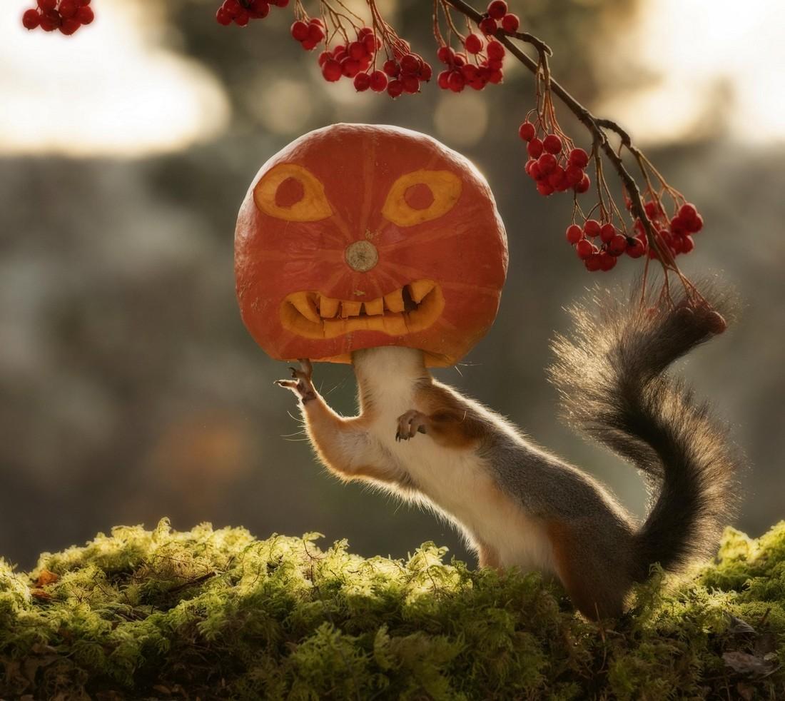 Забавные снимки белок к Хэллоуину