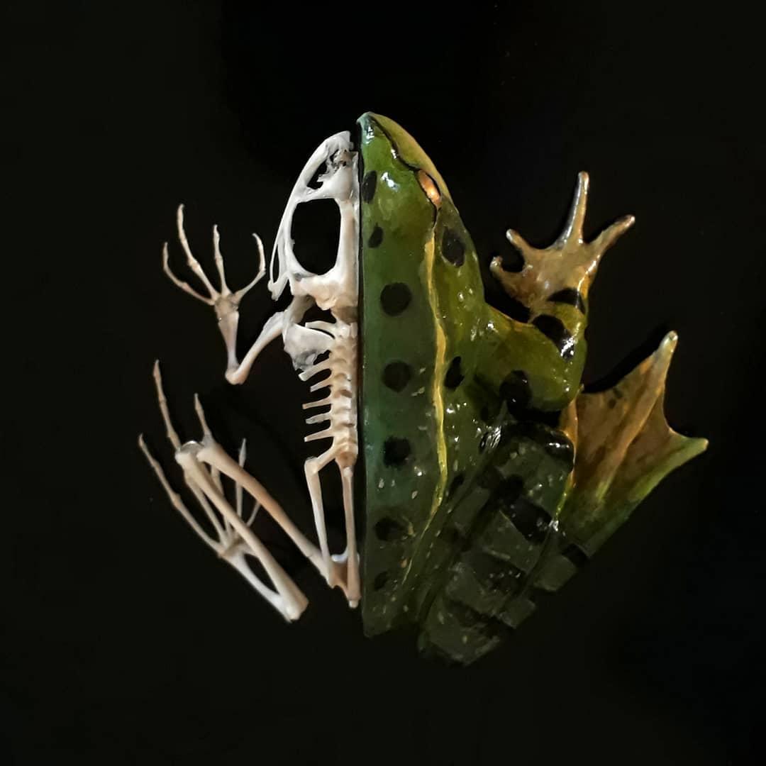 Французские остеологи публикуют скелеты разных животных в Instagram