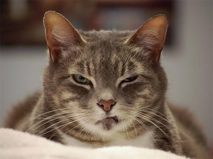 Сердитые котики с суровым взглядом