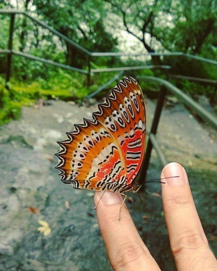 Снимки поразительных и удивительных творений матушки-природы