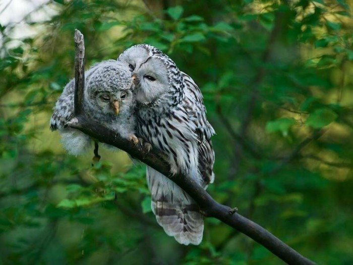 Крутые и милые совы, которых невозможно не любить