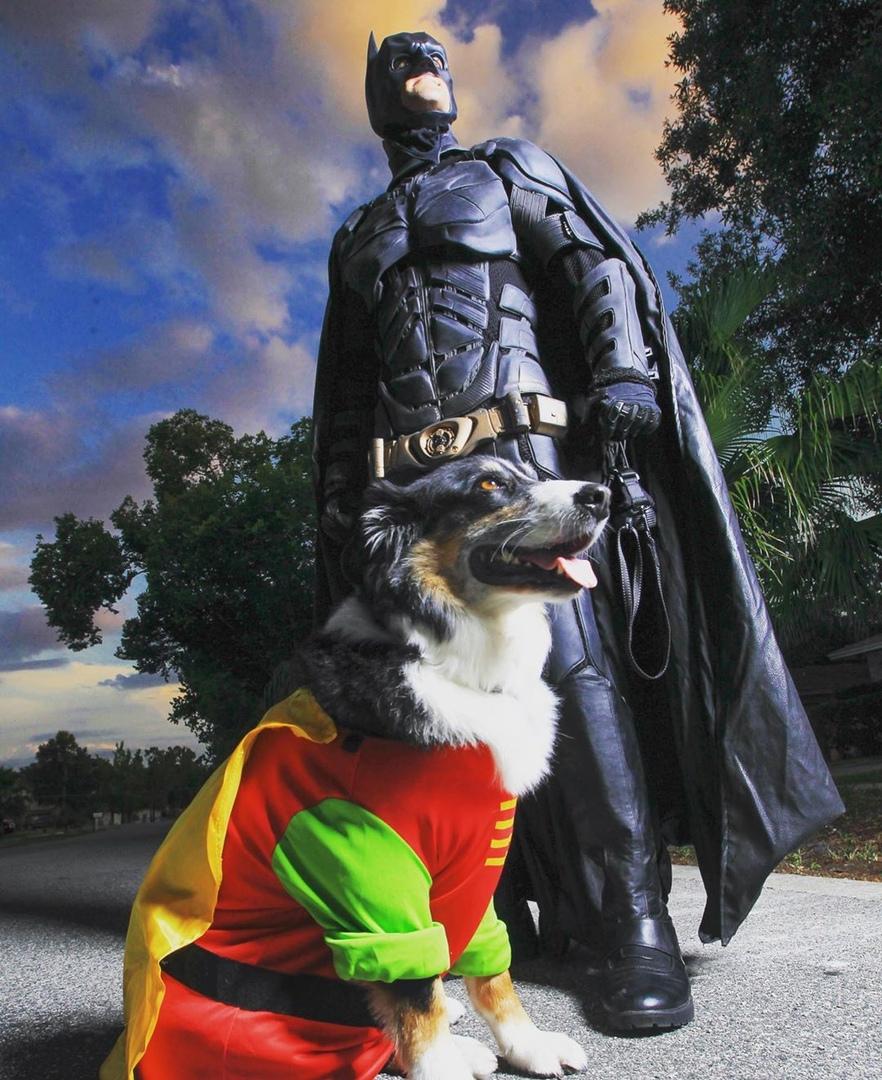 Новый Бэтмен теперь спасает не людей, а животных