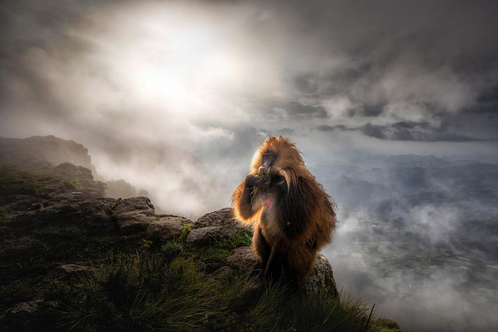 Победители европейского конкурса фотографий дикой природы 2019