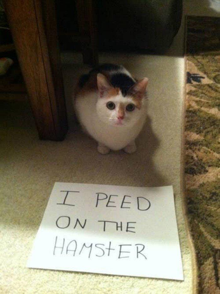 Коты всегда живут по своим правилам