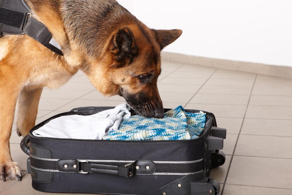 Собаки на работе в объективе