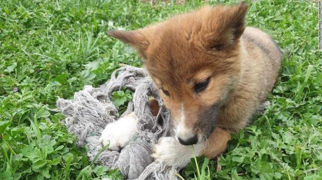 Женщина из Австралии приютила щенка и ее ждал сюрприз