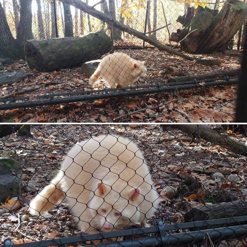 Животные-альбиносы с удивительной внешностью