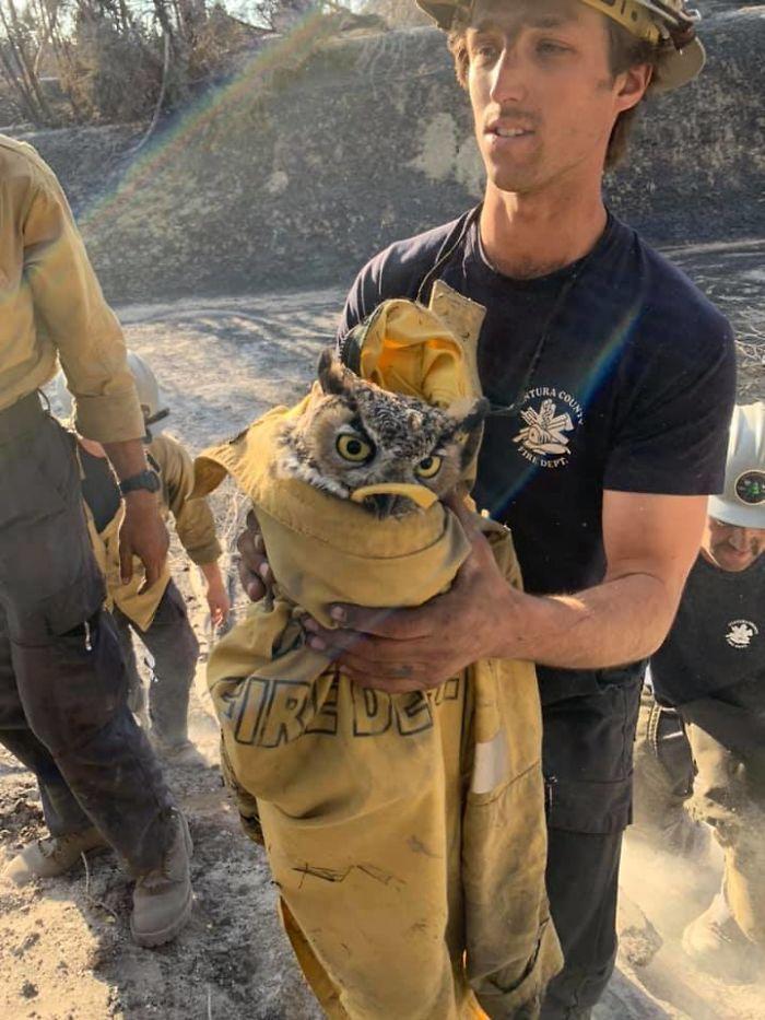Снимки с пожарными и злой совой рассмешили народ