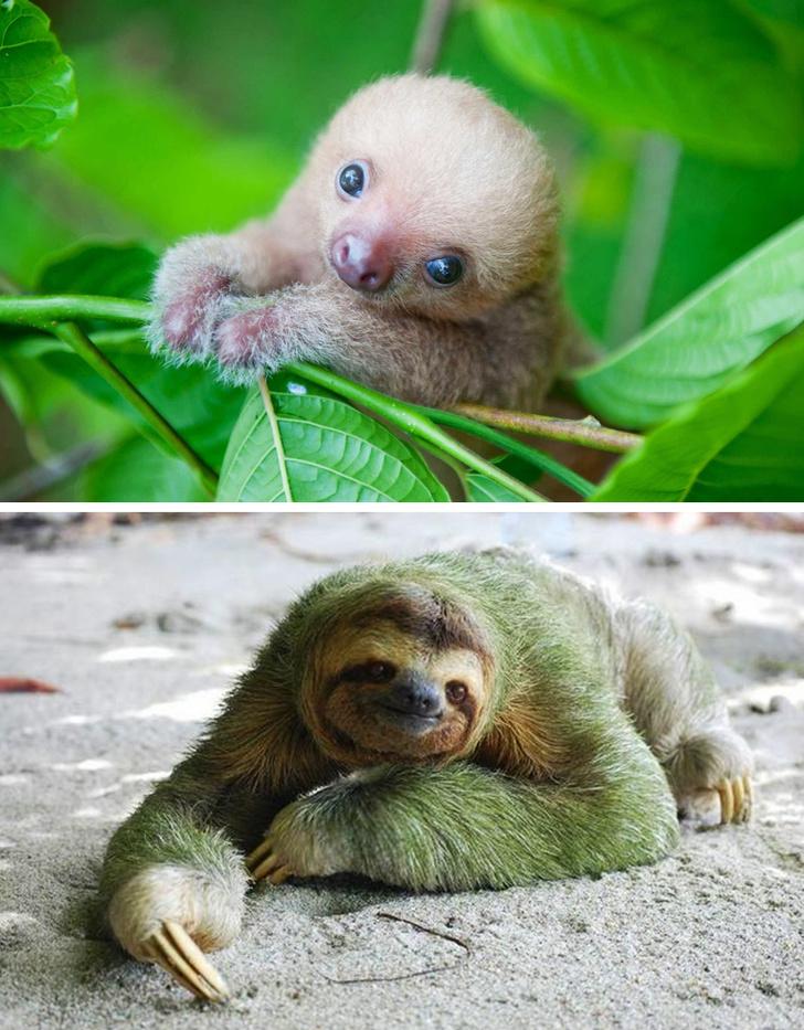 Милые малыши животных, которых мы привыкли видеть взрослыми
