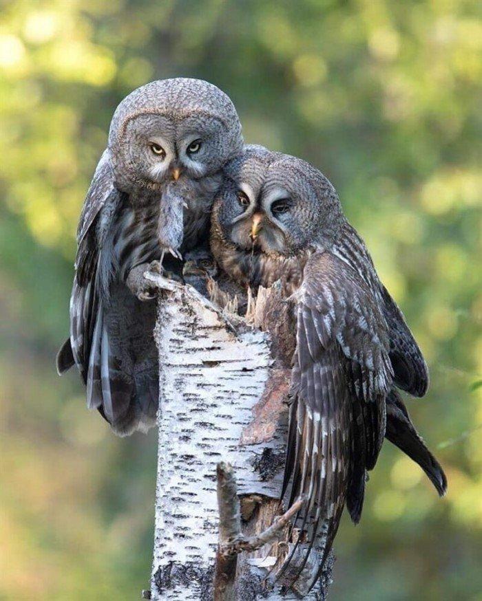Эмоциональные совы, которые сразят вас своим обаянием
