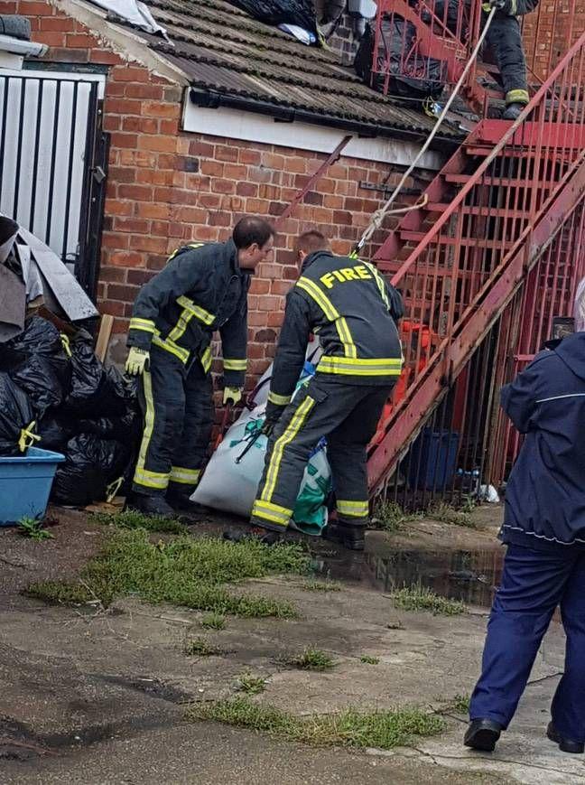 Пожарные помогли вытащить домашнюю свинью весом 190 кг из квартиры