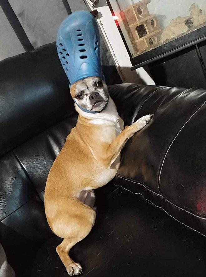 Домашние питомцы с кроксами на головах
