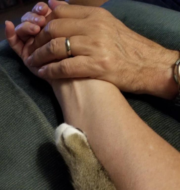 Когда домашние животные - это полноценные члены семьи