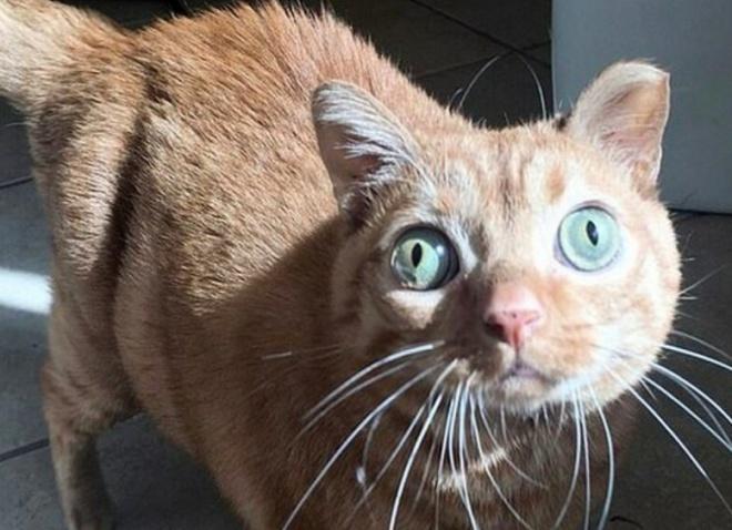 Потейто - кот, который стал звездой благодаря своим глазам