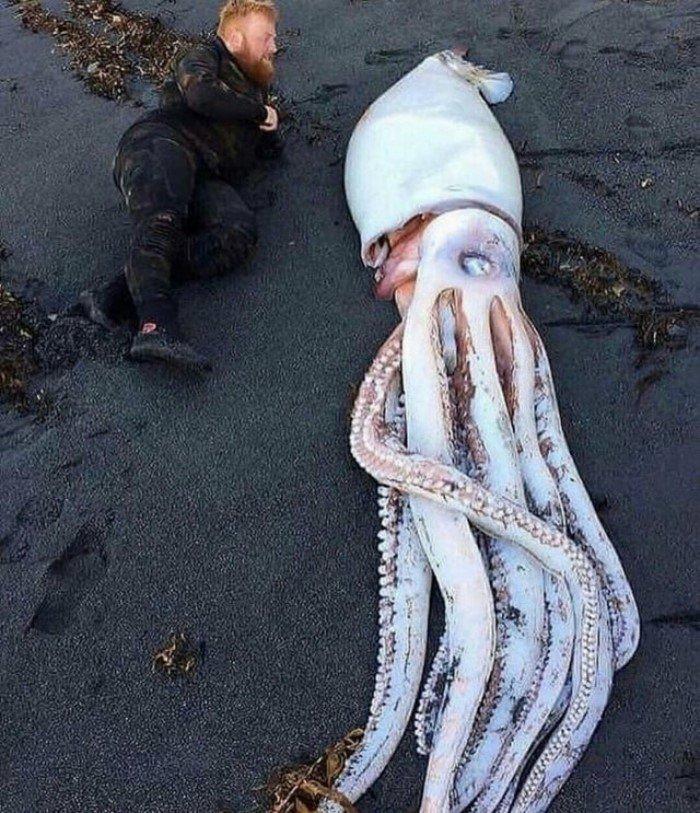 15 неожиданных находок, которые были сделаны на пляже