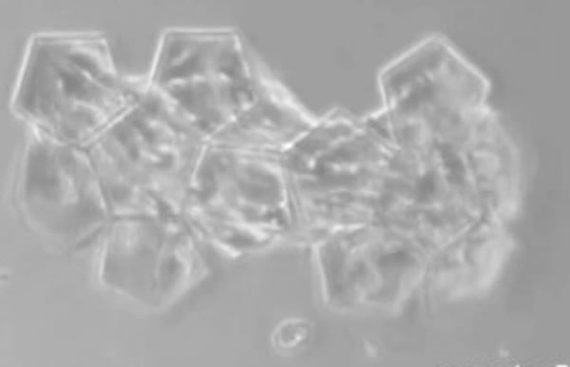 Самые микроскопические вещи из когда-либо созданных