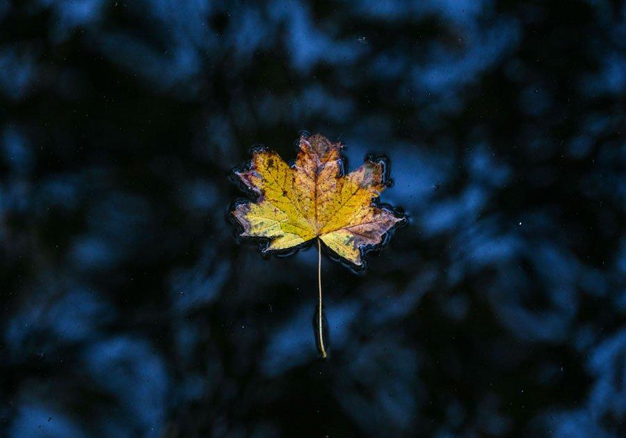 Волшебные краски осени на снимках