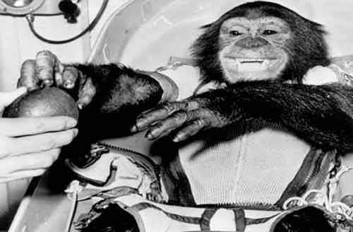 Животные, которые повлияли на ход истории
