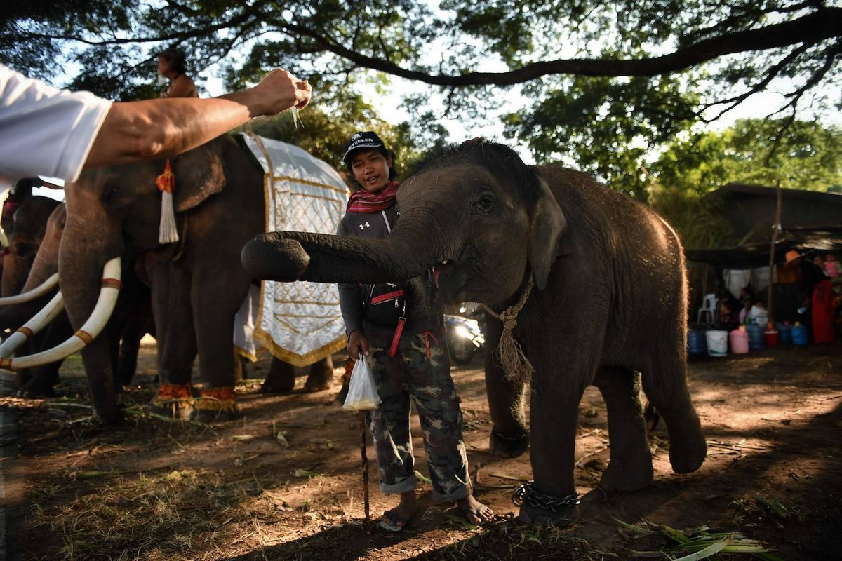 Фестиваль слонов 2019 в Таиланде