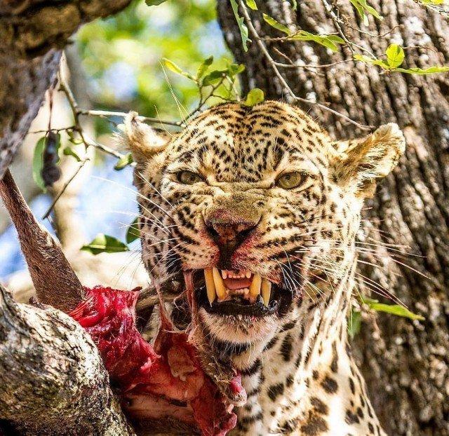 В дикой природе выживает сильнейший