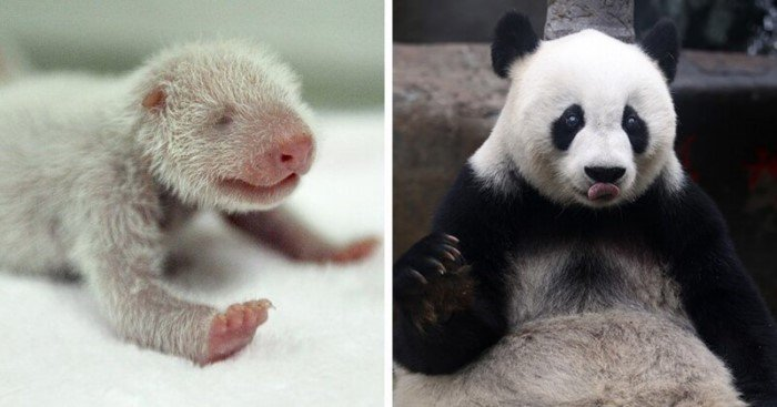 15 детёнышей животных, которые не похожи на своих родителей
