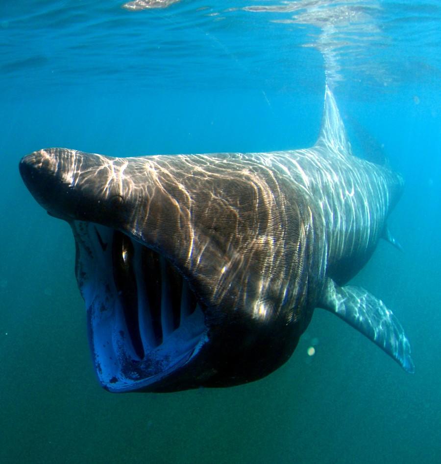 Вызывающие ужас животные, которых не стоит опасаться