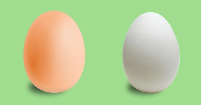 Чем коричневые яйца отличаются от белых