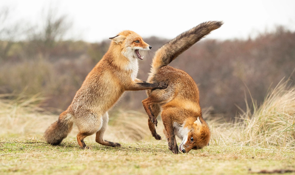 Призёры фотоконкурса Comedy Wildlife Photography Awards 2019