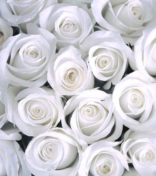 Насколько стильно выглядят обычные вещи в белом цвете