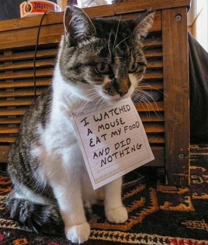 Фотографии о трудностях жизни с котом под одной крышей
