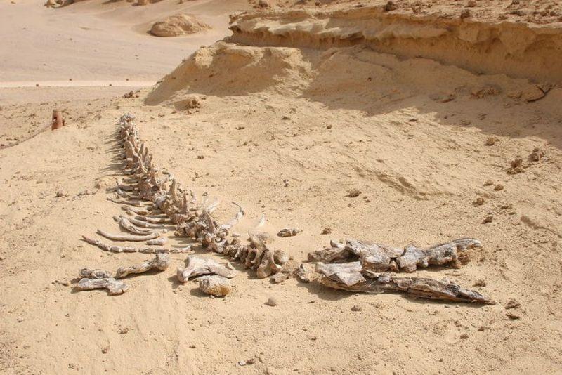 Долина китов в Сахаре, где они обитали 40 млн лет назад