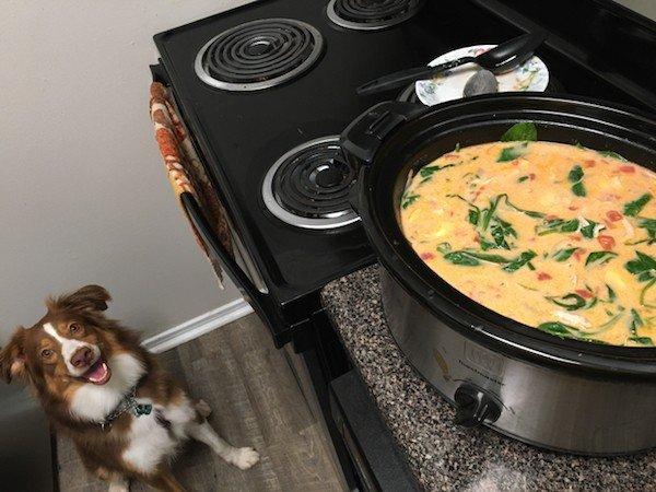 Домашние животные просят еду, хотя только что поели