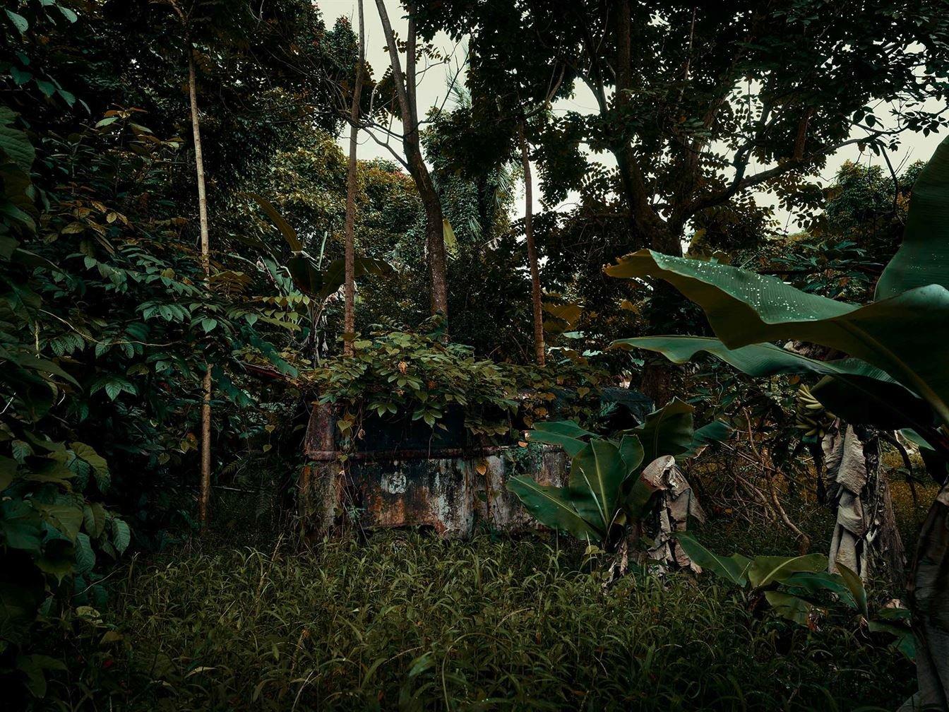 Заброшенные автомобили в густых гавайских лесах