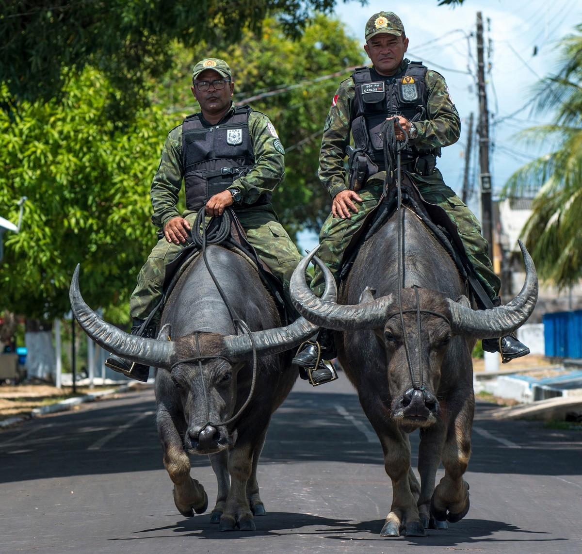 Бразильские копы патрулируют улицы верхом на огромных буйволах