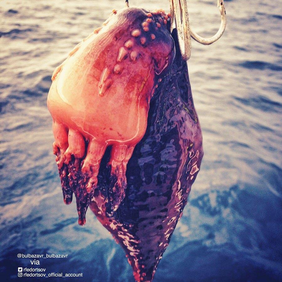Новые странные существа из морских глубин от Романа Федорцова