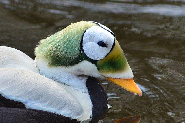 Удивительная внешность этих животных говорит сама за себя