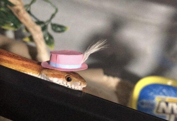 Змеи в шляпках выглядят очень даже симпатично