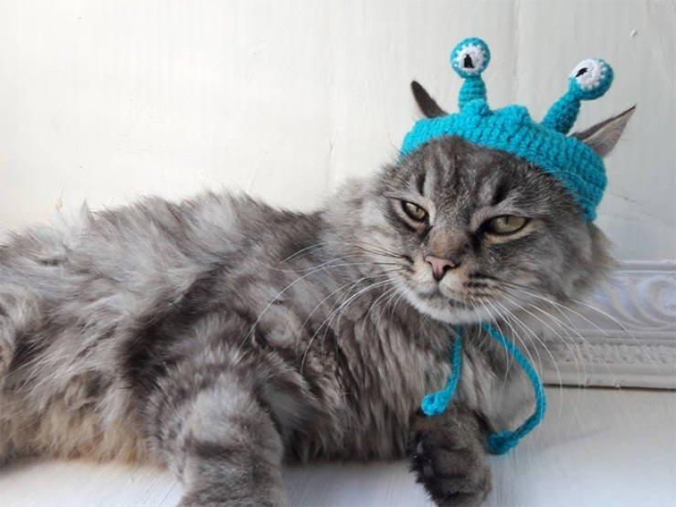 Домашние питомцы в вязаных шапочках