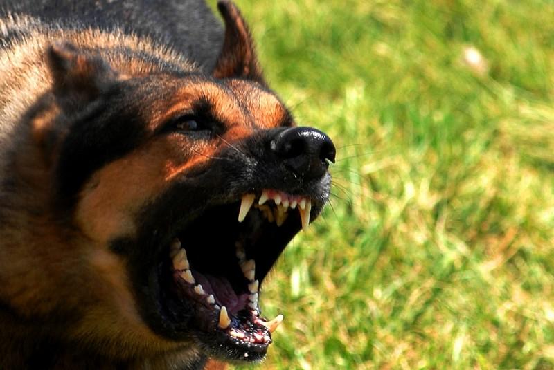 Как спастись при нападении смертельно опасных животных
