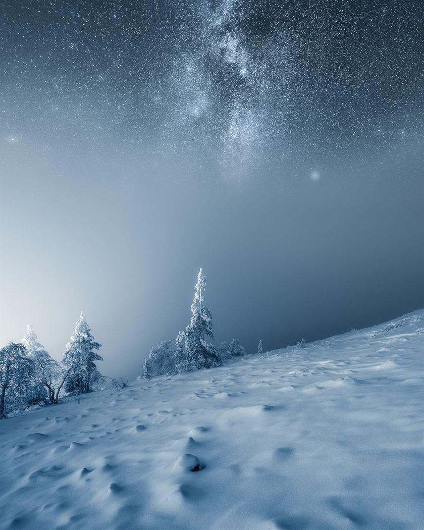 Снимки одиноких деревьев на фоне безмятежных финских пейзажей