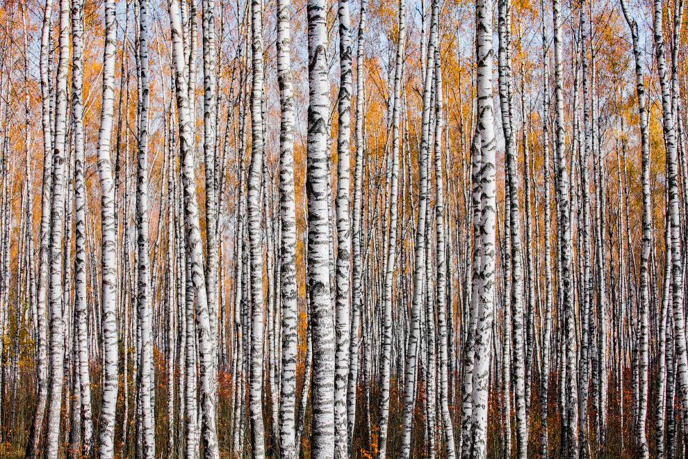 Победители фотоконкурса Британского экологического общества 2019