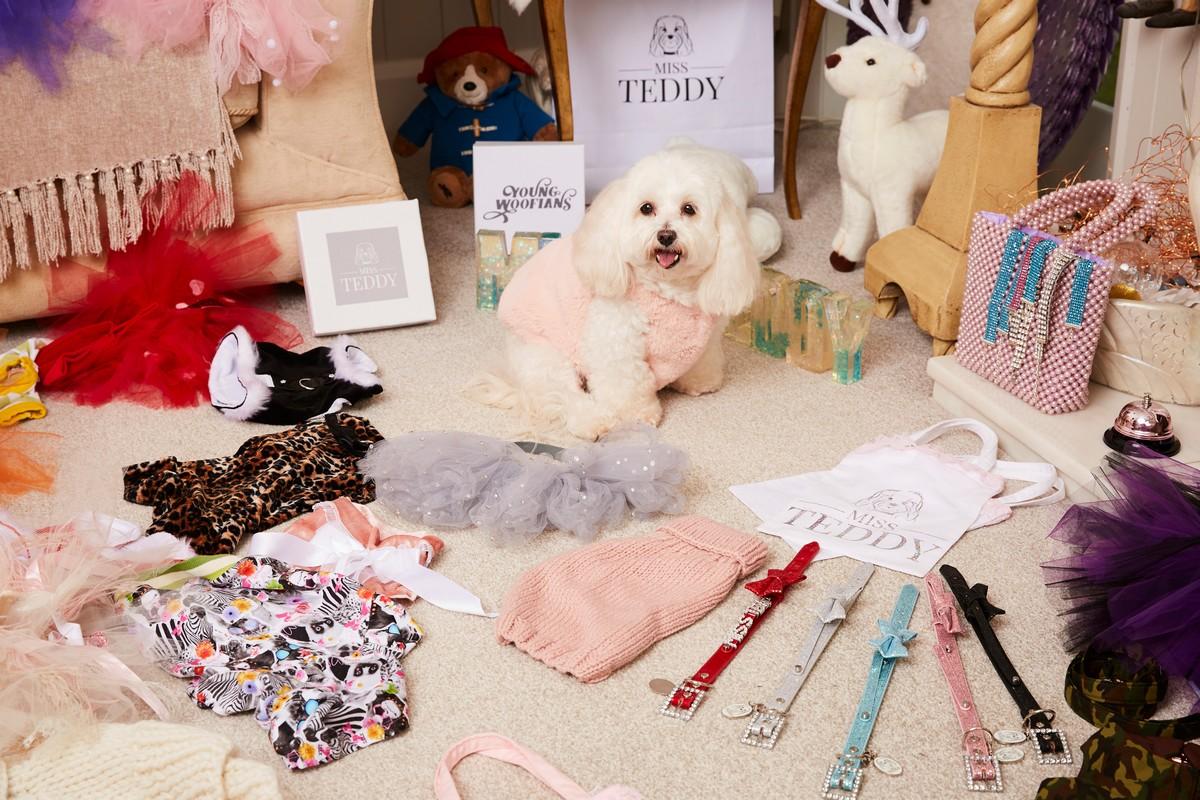 Британка потратила $3 500 на рождественские подарки для собачки