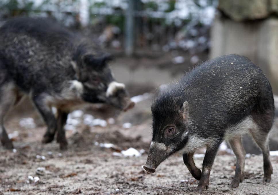 Híres állatok, akik az intelligenciájukkal ütöttek