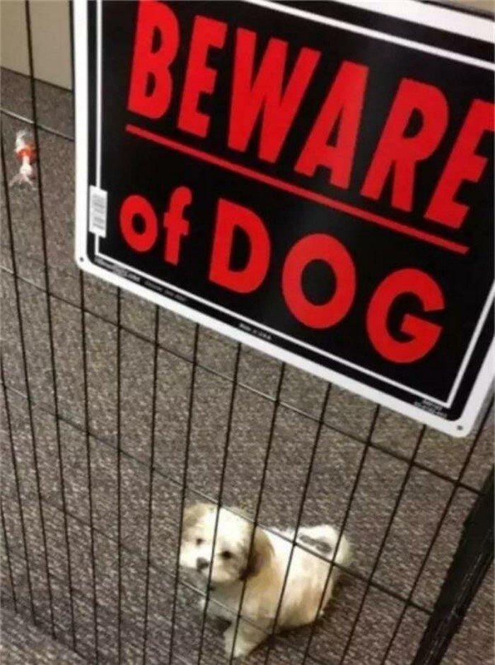 Милые пёсели и таблички Осторожно, злая собака!