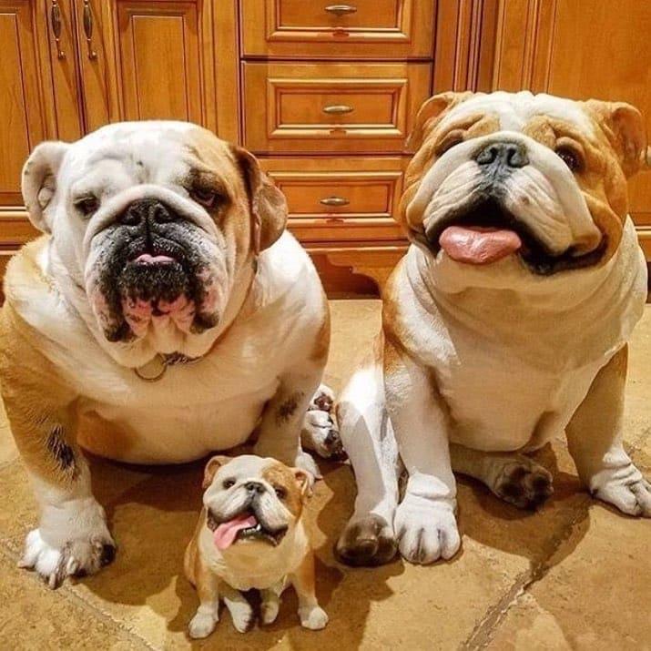 Милые семьи из мира животных, которые растопят ваше сердце