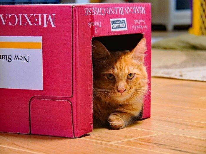 Почему же коты так любят коробки
