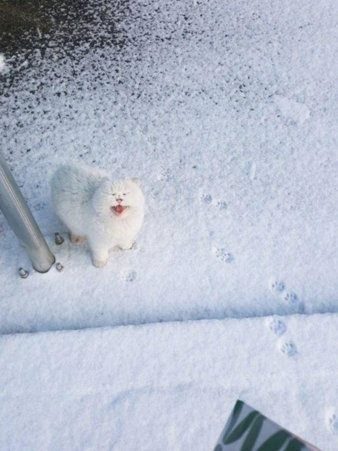 Котики и их реакция на снег