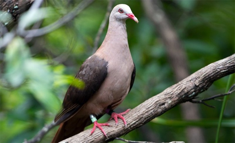 Самые редкие виды птиц в мире