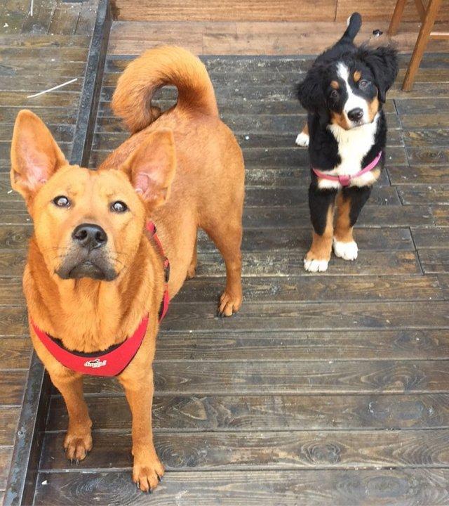 Необычные смешанные породы собак
