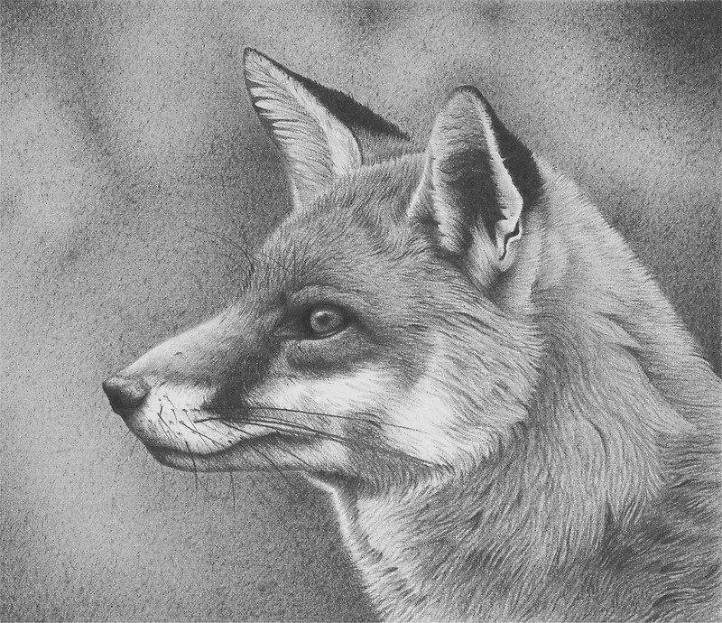 Нарисованные животные карандашом простым картинки